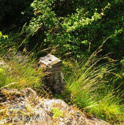 Une borne dans la végétation dense, très dense, qui laissera des souvenirs aux mollets de Jérôme, venu en short... !